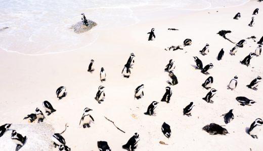 映画「ペンギン・ハイウェイ」の感想。純粋な探究心は人をどこに連れていくのか