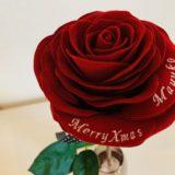 メリアルーム赤バラ