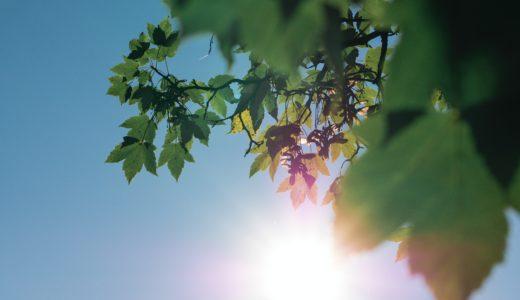 【クチコミ・レビュー】ヤケーヌで日差しをカット+意外な使い方を発見しました